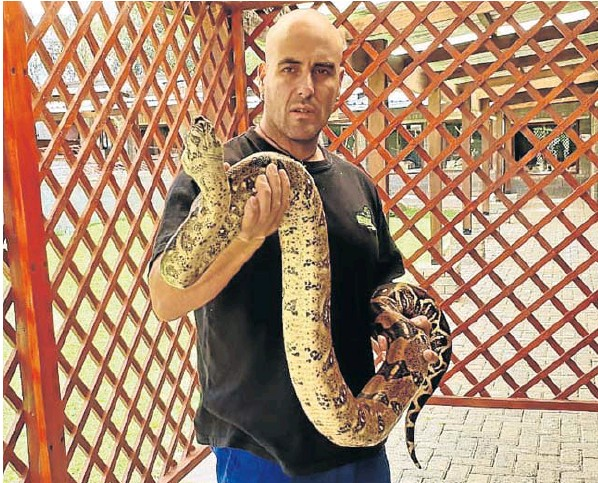 Eleven more snakes found at an illegal snake pit have joined this Columbian boa constrictor at Venom Snake Pit Park. Police found the constrictor in a car in the EL CBD on Monday.