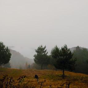 After rain by Alexandru Lupulescu - Landscapes Mountains & Hills