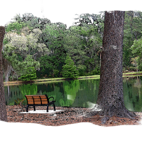 A Lone Bench by Edward Gold - Digital Art Places ( digital photography, bench, bushes, artistic, scenic, trees, water, single bench, digital art,  )