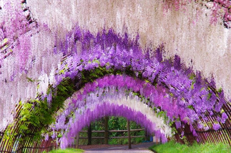 Photo: Kitakyushu. Japan: Kawachi Fuji Garden
