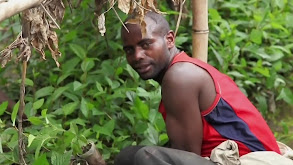Rwanda -- Among the Gorillas thumbnail