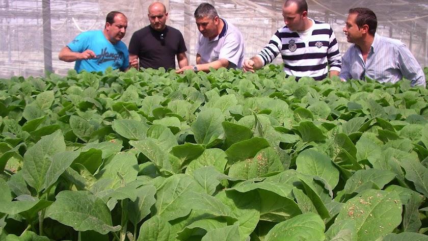 Los semilleros  son uno de los segmentos de negocio de la industria auxiliar que cuentan con mayor número de empresas en la provincia de Almería.