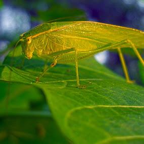 camoflage by Shubhendu Bikash Mazumder - Animals Insects & Spiders