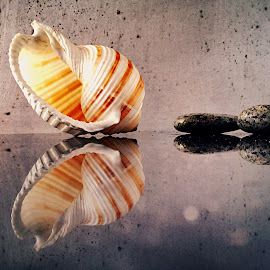 Seashell and pebbles by Janette Ho - Artistic Objects Still Life