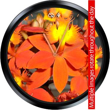 Orchids 2 Watch Face