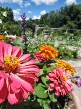 Photo: Gorgeous flowers on a sunny day at Wegerzyn Gardens in Dayton, Ohio.