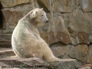 Photo: Knut schaut sich aufmerksam um ;-)