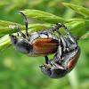 Beetles spotting