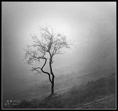 Photo: tree in fog