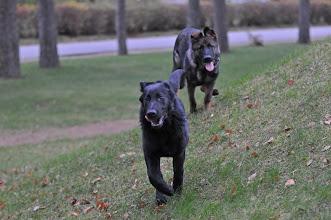 Photo: Kahn og Vilma 4,5 mnd