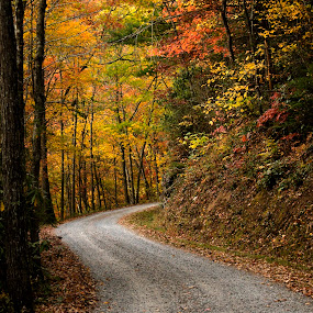 The road less taken by Steven Faucette - Landscapes Mountains & Hills ( cataloochee, mountains, fall, great smokey mountains, north carolina )
