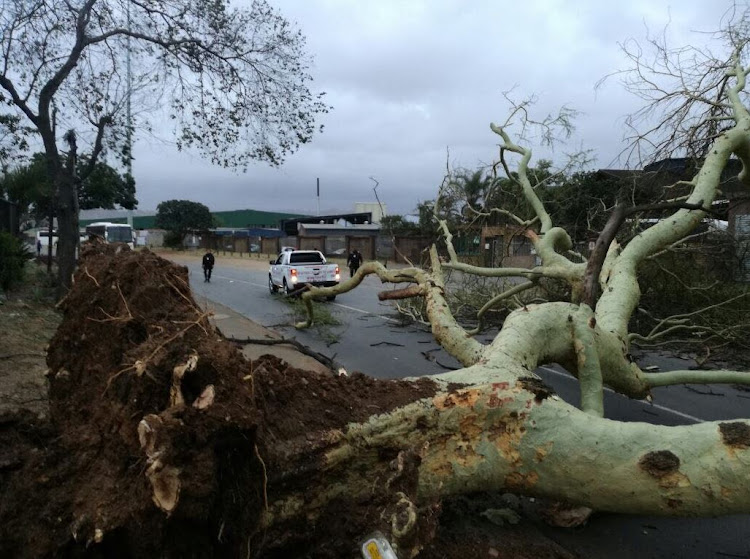 Roads were strewn by fallen fever trees as high winds struck KZN.