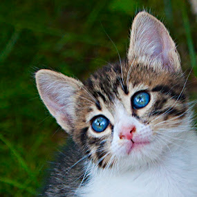 INNOCENT by Nihan Bayındır - Animals - Cats Portraits ( tiny, cats, nature, cute, photography, animal )