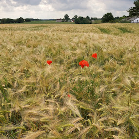 by Hilde Van Assche - Landscapes Prairies, Meadows & Fields