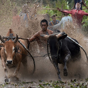 Great Spirit by Achmad Tibyani - Sports & Fitness Rodeo/Bull Riding ( bull race, the joki, cow race, spirit, pacu jawi )