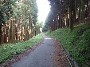 最後は林道歩き