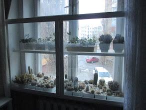 Photo: Зимівля кактусів