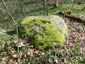 Photo: Bronze age Ring stone in Northcliffe Wood Shipley