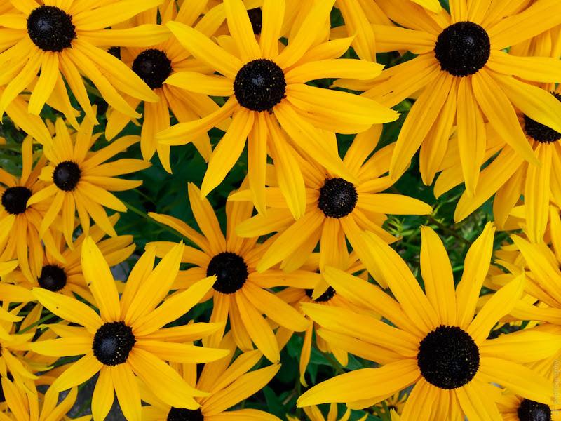 Petali gialli di bepi1969