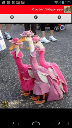 صور حيوانات مضحكة غريبة وعجيبة