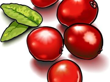 Cranberry Sauce Yummo Recipe