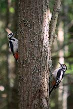 Photo: A pair o' peckers