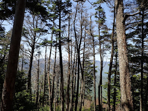 木々の間に安倍奥の山