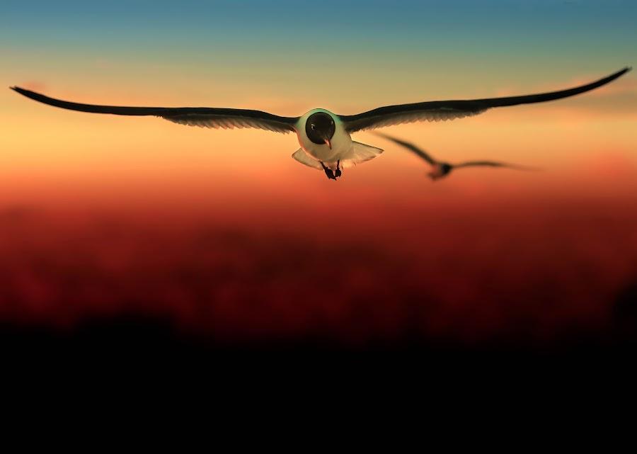 Freedom by Kreativelens Photography - Animals Birds ( orange, seagull, sunset, seagulls, sea, beach )