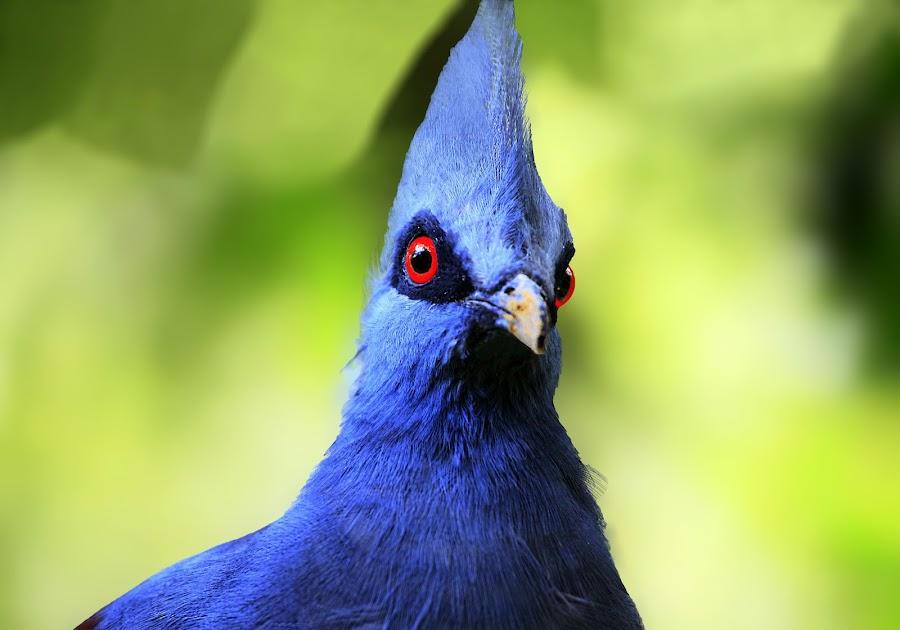 PUNK HEAD by Tzong Lion T - Animals Birds