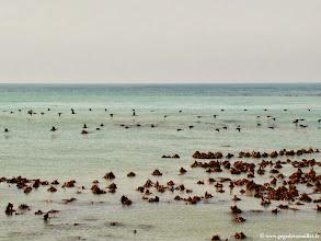 Photo: #002-Beaucoup d'oiseaux au départ de Kleinbaai.