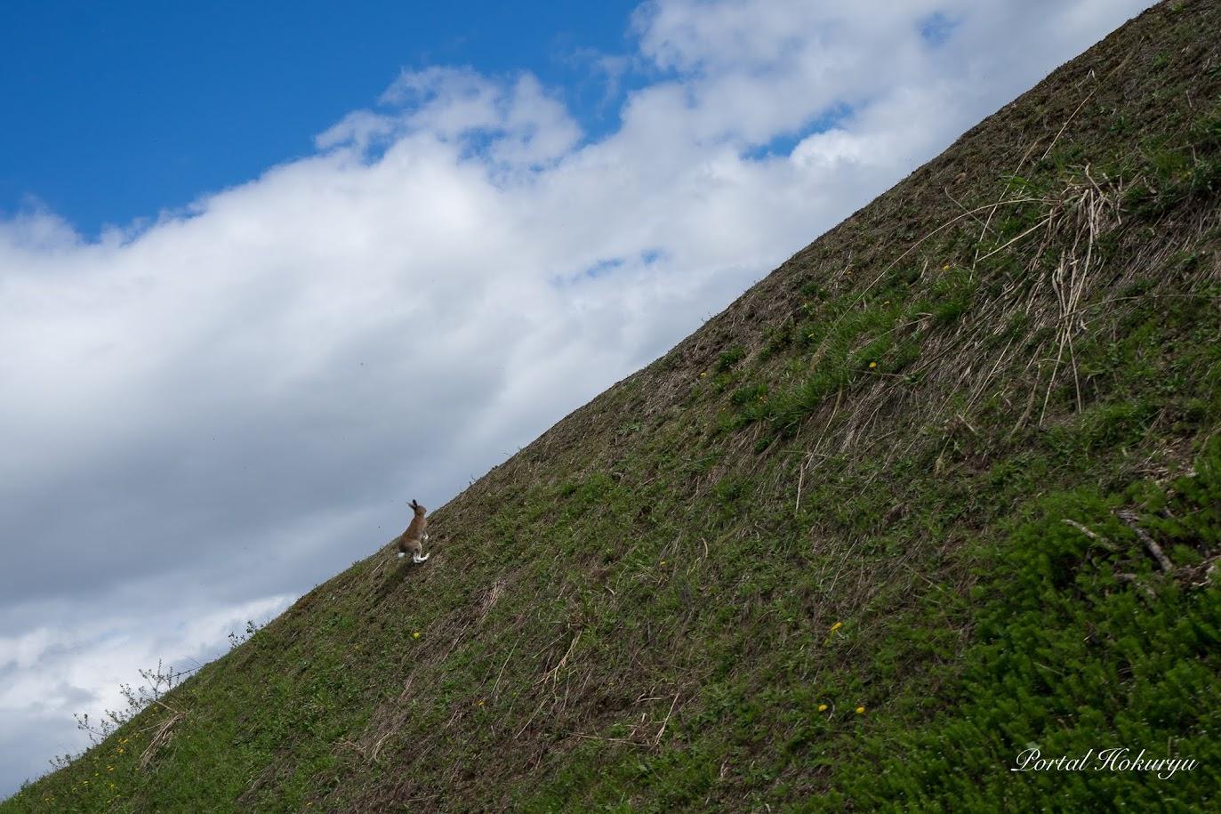 丘を駆け抜けるうさぎちゃん