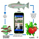Aquaponics Guide Aquaculture