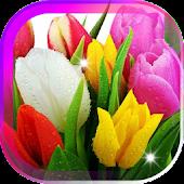 Amazing Tulips live wallpaper