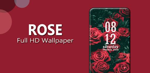Rose Wallpaper Full Hd Aplicaciones En Google Play