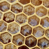 Honeycomb Pattern Wallpapers