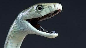 Snakes thumbnail