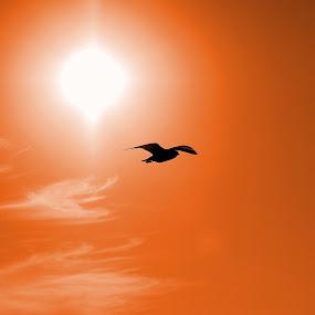 by Joe Spandrusyszyn - Landscapes Weather ( bird, flight, orange, flying, seagull, pwcotherworldly, sun )