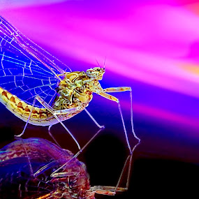 Colour Fusion by Steven Butler - Animals Insects & Spiders ( colour, reflection, macro, insect )