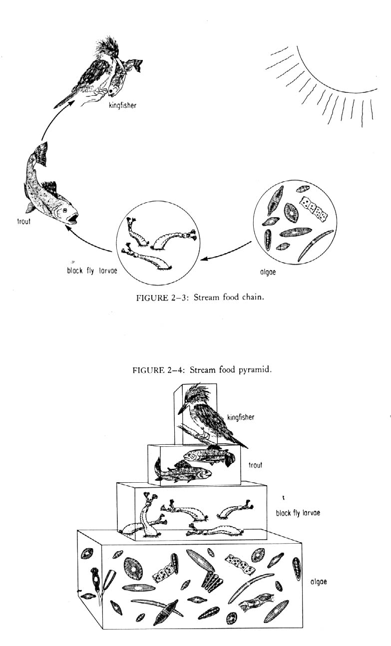rohlenscience / Ecology Notes