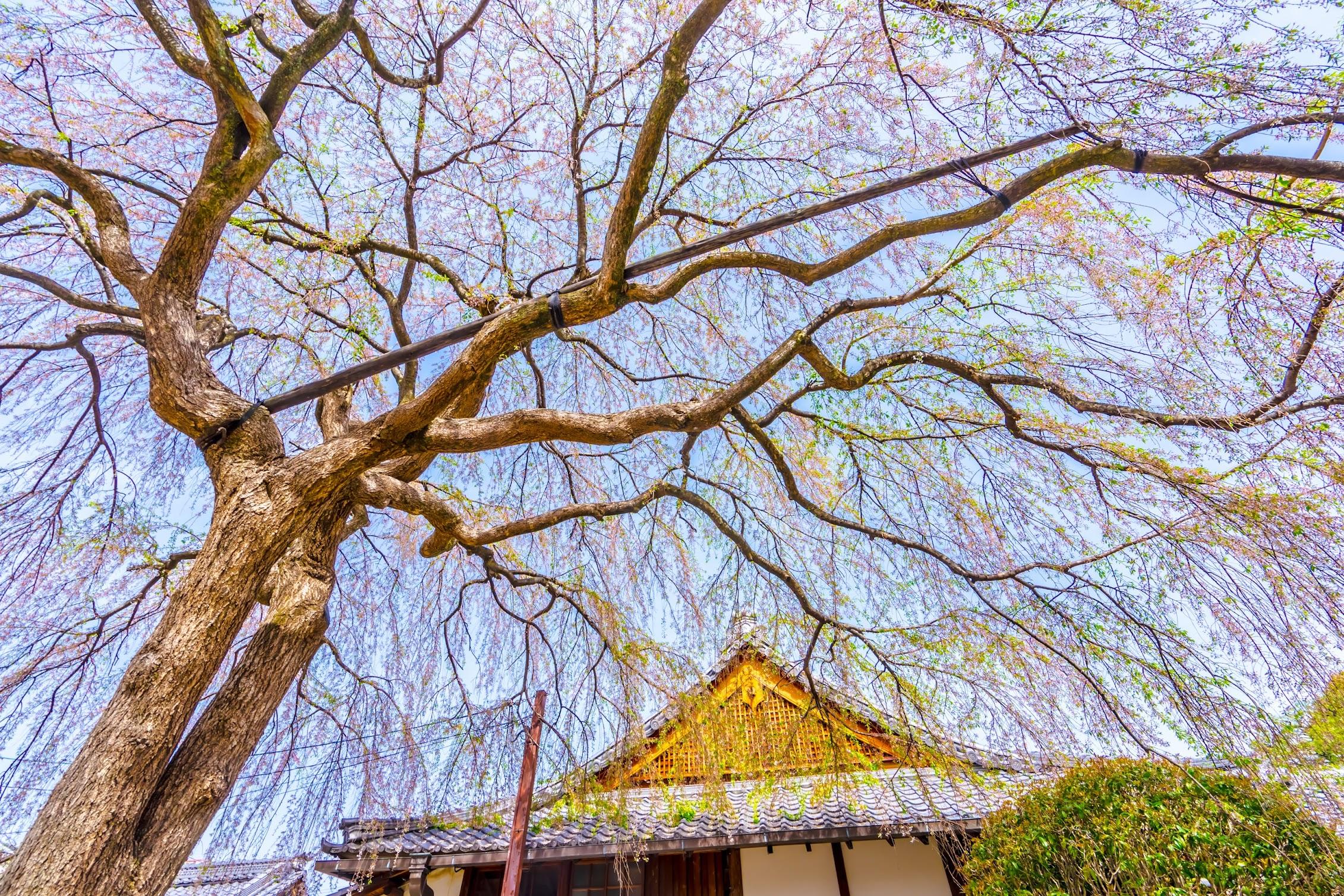 京都 本満寺2