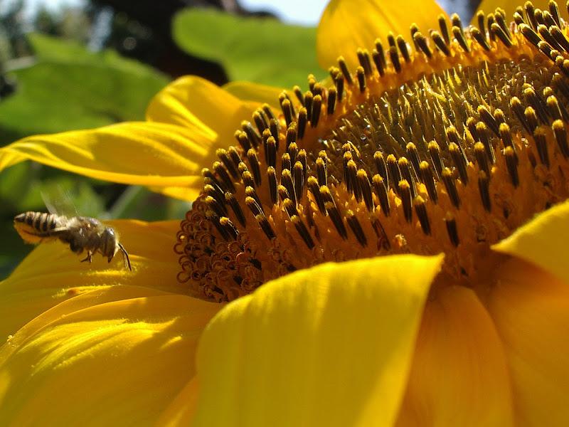 giallo irresistibile...slurp! di francescafotog