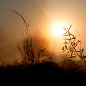 Lights up by Mahesh Thiru - Nature Up Close Flowers - 2011-2013 ( grass, sun light )