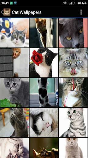 Download Cat Wallpapers Google Play Softwares Arfklmewrira Mobile9