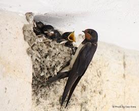 Photo: Day 86 -  Feeding Time #2