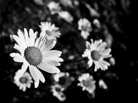 Semplicità e purezza. di PaolaFranco