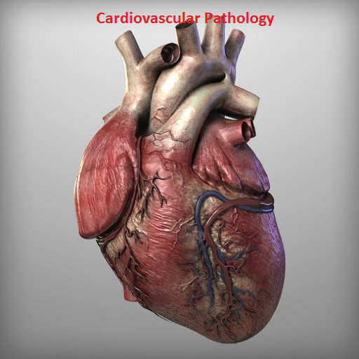 Cardiovascular Pathology (app)