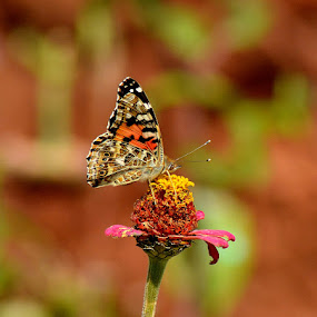 by Bhaskar Patra - Animals Insects & Spiders