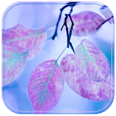 Theme Purple Leaf