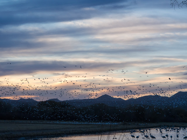 Birds at Bosque del Apache National Wildlife Refuge