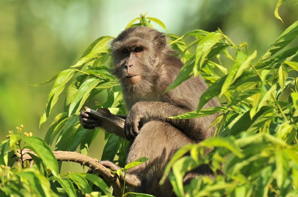 top-10-biosphere-reserves-india-Great_Nicobar_Biosphere_Reserve-Image